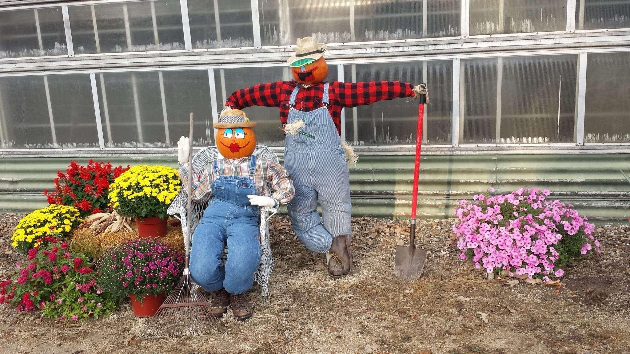 Scarecrow Sue's Flower 9 2014