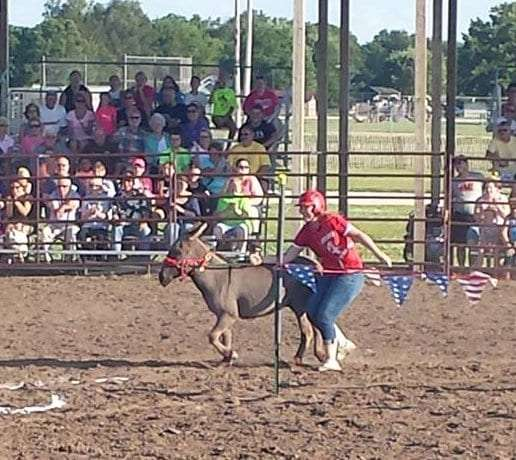 Donkey Race 2