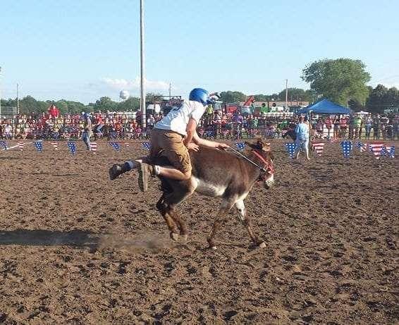 Donkey Race 5
