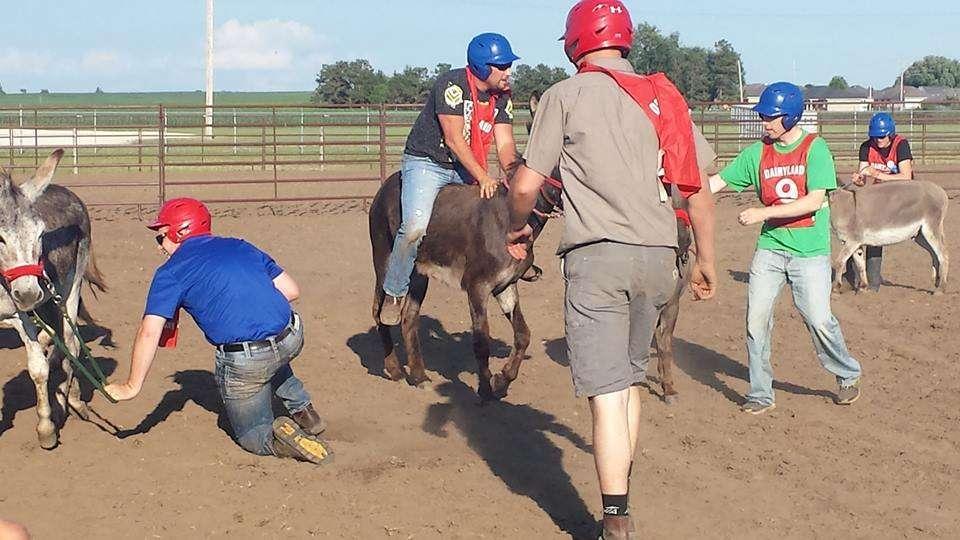 Donkey Race 6