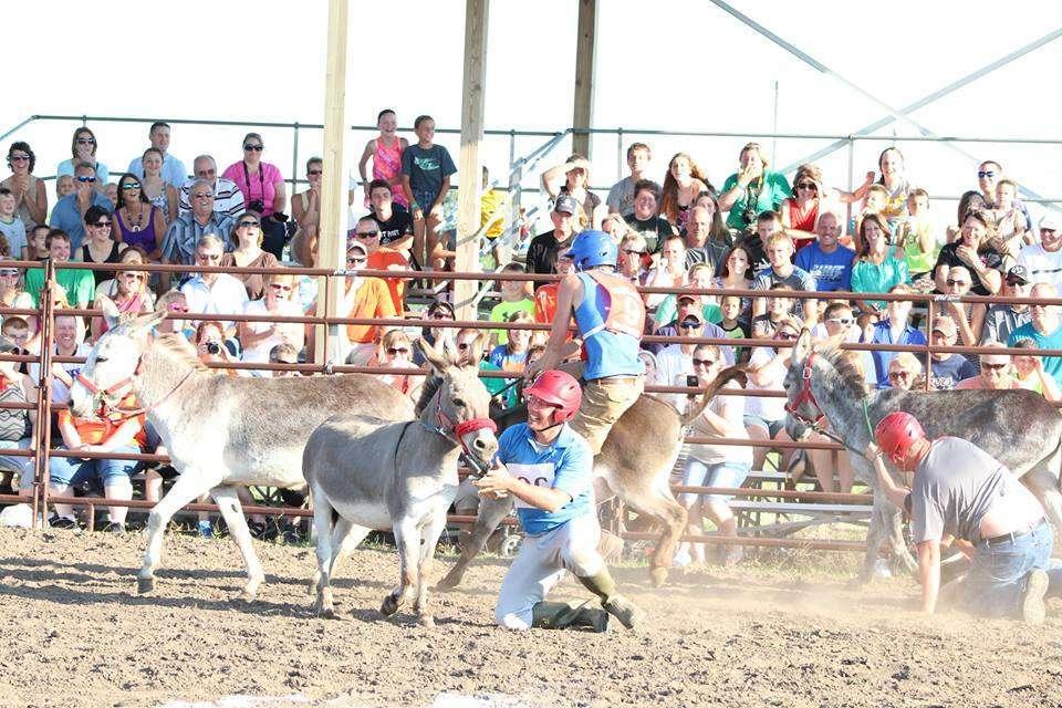 Donkey Race 8